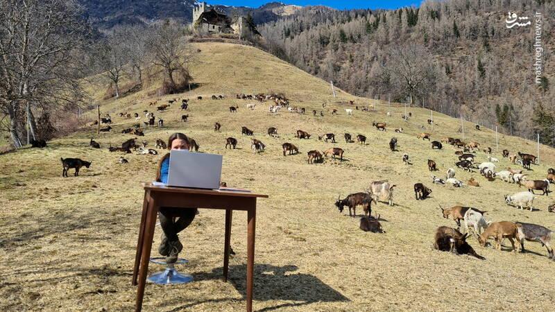 کلاس آنلاین