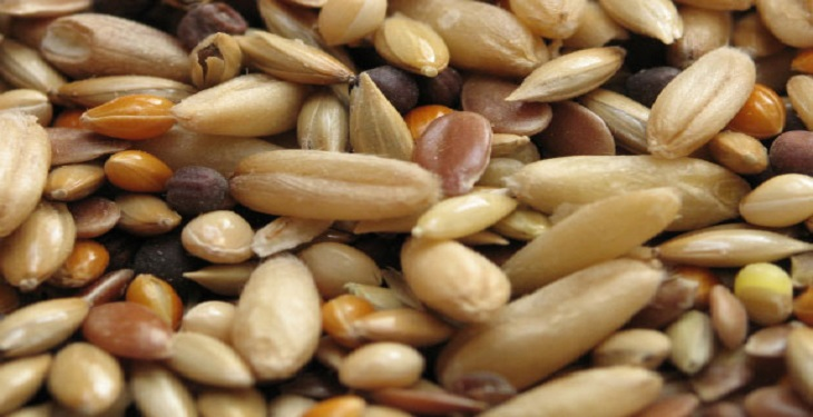 the-healthiest-Oilseed-nuts