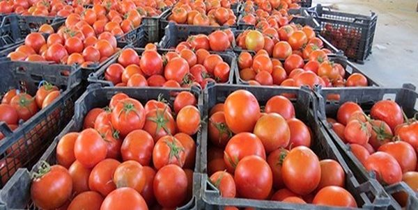 22 تن گوجه فرنگی قاچاق توقیف شد