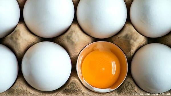 در روز چند تخم مرغ بخوریم؟