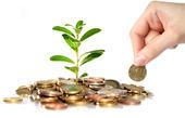 بهترین سرمایهگذاری در ایران با پول کم