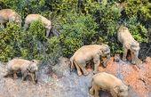 راهپیمایی فیلها + فیلم