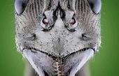 عکاسی ماکرو از سر مورچه
