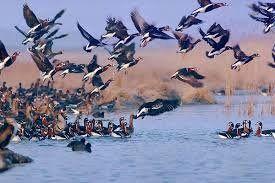افزایش 7 درصدی شمار پرندگان مهاجر گیلان