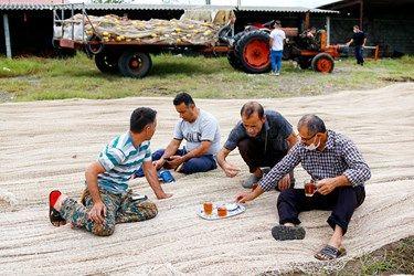 چینیگ چی ها پس از کار روزانه به صرف چای و استراحت نشسته اند