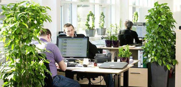 تاثیر گل و گیاه در افزایش بازدهی فعالیت در محیط کاری