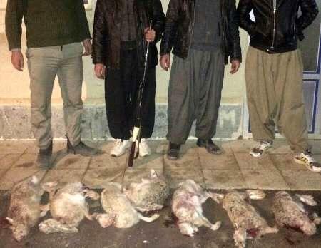 29 نفر به اتهام شکار در مهریز دادگاهی شدند