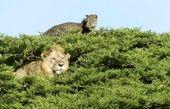 تصویری جالب از حیاتوحش آفریقا