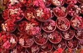 """کاشان در بین صادرکنندگان """"گل""""در جهان ایران مقام هفتم را دارا میباشد"""