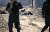 ۳ تروریست داعشی با سوریه کشته شدند
