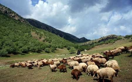 پنج هزاردام پارسال از مراتع قزوین خارج شدند