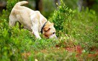 آیا سگها قادر به کشف کووید-19 هستند؟