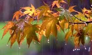 پیش بینی وزش باد شدید همراه با باران در مرز مهران