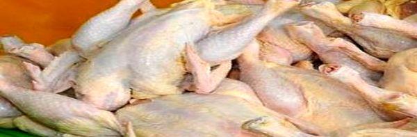 اعتراض تولیدکنندگان به قیمت اعلامشده مرغ