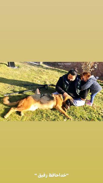 خداحافظی رضا صادقی با سگ باوفایش + عکس