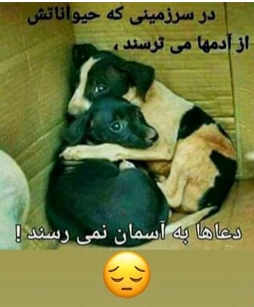دید مهربان فاطمه گودرزی به حیوانات