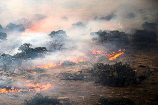 بخشی از آتشسوزی جنگلها عمدی و دستی در کار است