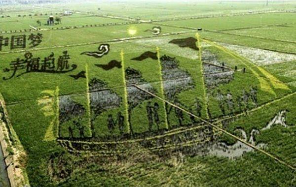 تصویری که ژاپنی ها روی مزارع برنج خود خلق کردند + عکس