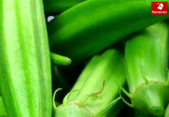 صدور مجوز واردات بذر بامیه از ایالات متحده آمریکا