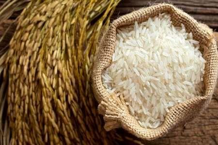 ترخیص برنج از گمرک مجاز شد