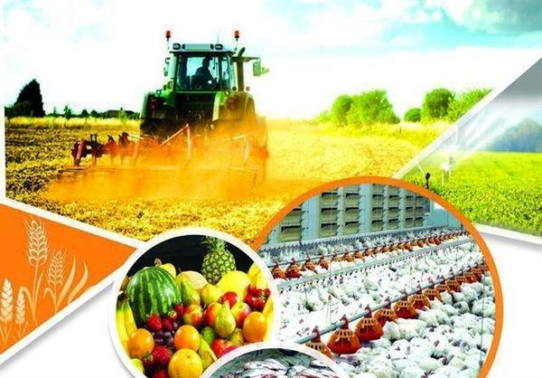 کاهش تولید محصولات غذایی کشور از 14 میلیون تن به 10 میلیون