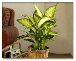 مراقبت از گیاهان در زمان رفتن به سفر