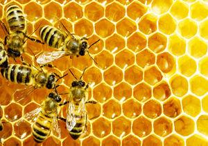 نیش زنبور جان مرد سلماسی را گرفت
