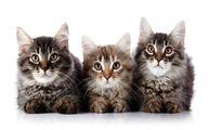 روش جالب چند گربه برای ورود به خانه+ فیلم