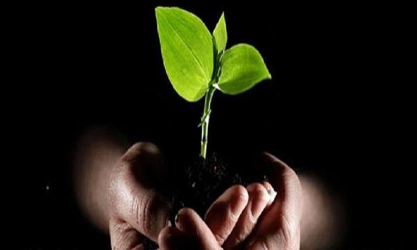 روند درمان اعتیاد به «گل» چگونه است؟