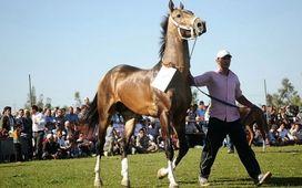 نطفه اسب، 6 میلیون تومان/معاملات میلیاردی اسب
