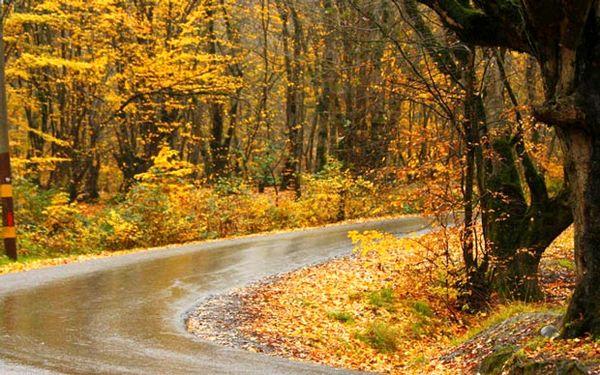 عکسهای زیبا از پاییز در جنگل گلستان