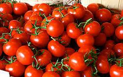 پای گوجه به قاچاق باز شد