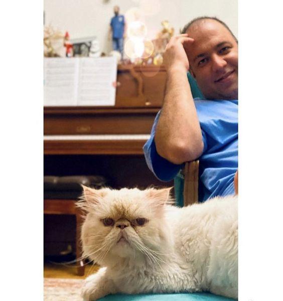 گربه خانگی علی اوجی + عکس