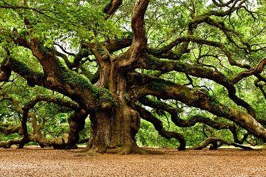 درختی که همپای دانشآموزان درس میخواند + عکس