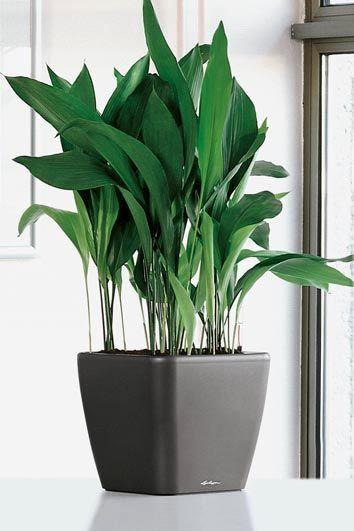 15 گیاه آپارتمانی سایه دوست و مقاوم به نور کم با نگهداری آسان