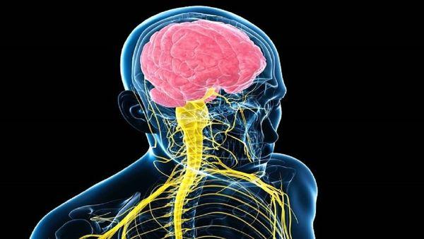 کرونا بر سیستم عصبی تأثیر دارد؟