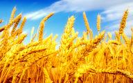 مصرف سوخت در بخش کشاورزی افزایش یافت