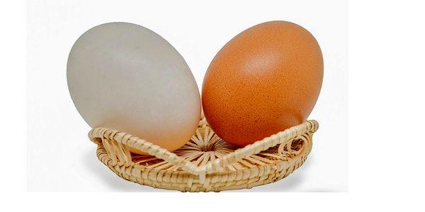 تخم مرغ قهوهای یا سفید؟