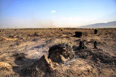 تصاویری دردناک و دلخراش از تالاب هشیلان
