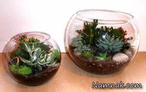 گیاهان مناسب برای کاشت در تراریوم