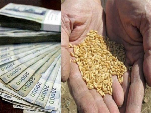 آیا نرخ ۱۷۰۰ تومانی گندم جوابگوی هزینههای کشاورزان است؟