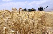 ۱۰۰ درصد بذر گندم از محل تولید داخل تامین میشود