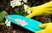 انتخاب کود مناسب عامل افزایش محصولات گلخانه ای در تحقق اقتصاد مقاومتی