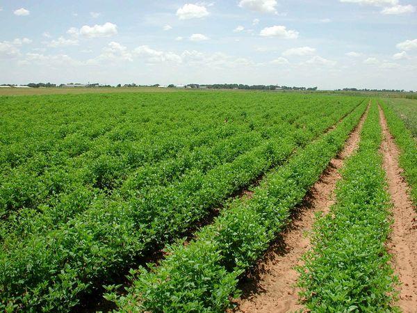 بهره وری پایین از معضلات پیش روی بخش کشاورزی است