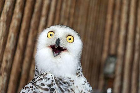 تصاویری جالب و خنده دار از حیوانات