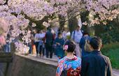 لذت زندگی را از ژاپنیها یاد بگیریم