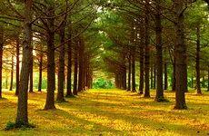 صدای نفسنفس زدن درختان برای آب، به گوش دانشمندان رسید