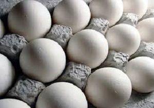 نرخ کنونی هر کیلو تخم مرغ 7 هزار تومان