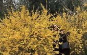مژده لواسانی در میان گلها + عکس