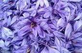 سازمان تعاون روستایی درباره رکوردشکنی تولید زعفران هشدار داد!